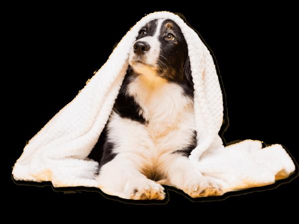 servicios y productos para Mascotas